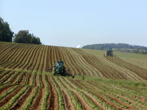 Tractors_in_Potato_Field-300x225